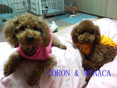 Coron_monaca_2